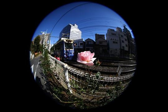 1G7A0951_R.JPG
